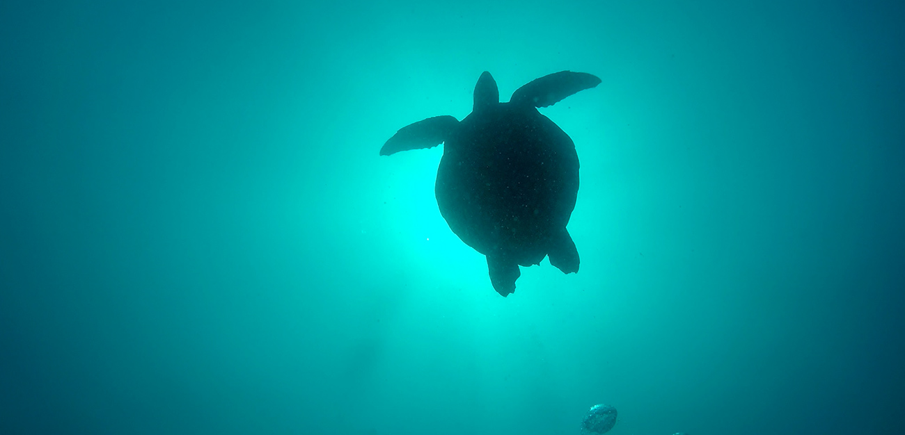 GoPro 4 scuba diving